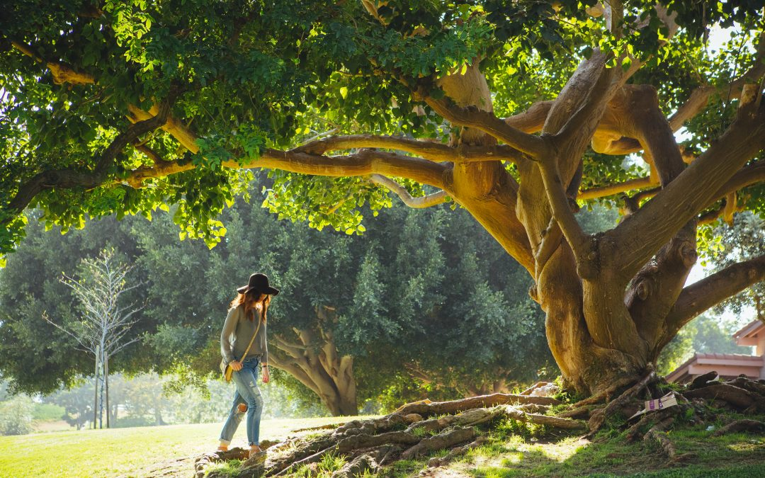 12 Reasons To Start The Holistic Life Coaching Certification This Summer